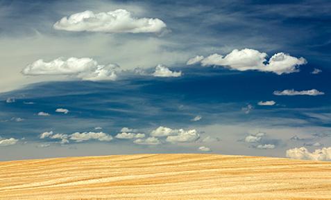 A bright golden, cut field beneath a cloudy and blue sky